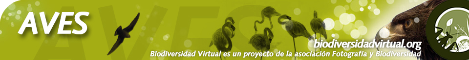 Biodiversidad Virtual Aves