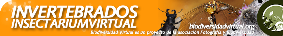 Biodiversidad Virtual Invertebrados