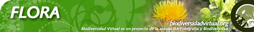 Biodiversidad Virtual Plantas